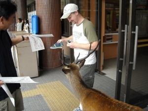 The rare Japanese paper eating deer